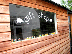 hedgehog-care-gift-shop
