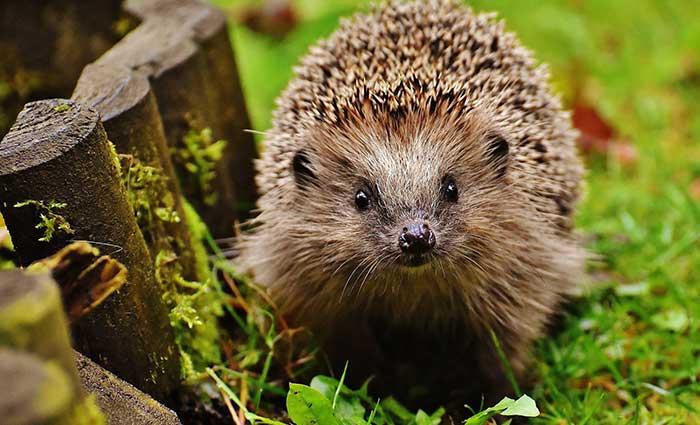 Hedgehog Care Rescue Sanctuary Donations