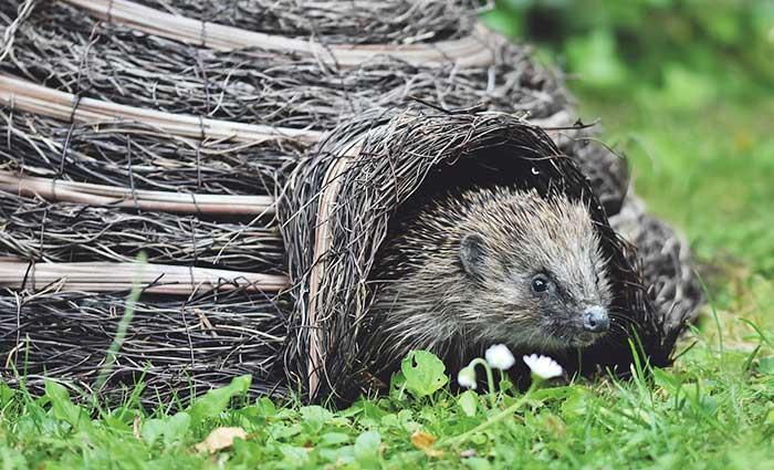 Hedgehog Care Rescue Sanctuary Events