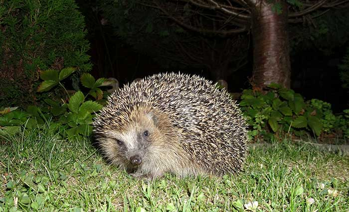 Hedgehog Care Rescue Sanctuary Join In